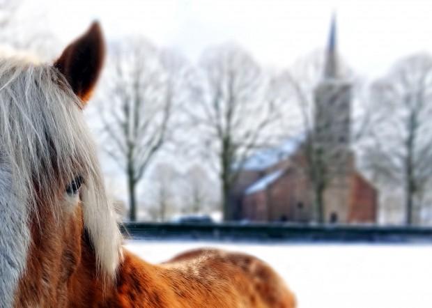 Horse in the Netherlands - Kruiskerk Burgum - Benjamin Feenstra
